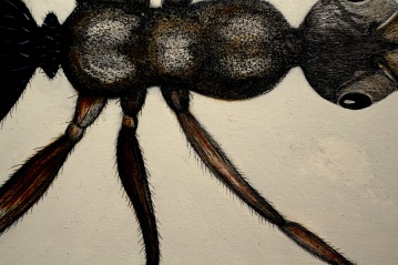 antdetail1