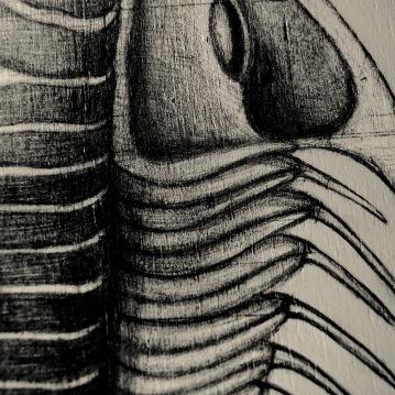 trilobite06