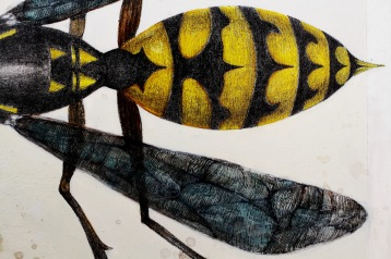 waspdetail05