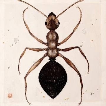 ant-1