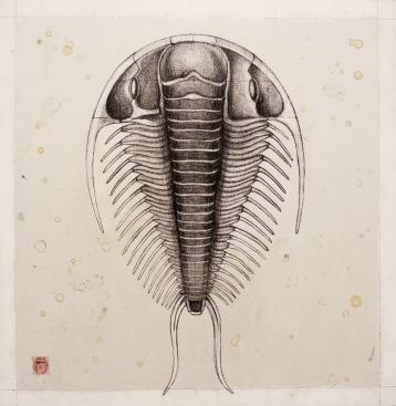 trilobite5