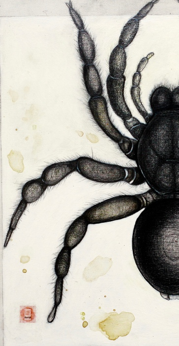 SpiderAnemesiadetail